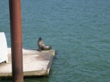 Seal on the Launching ramp